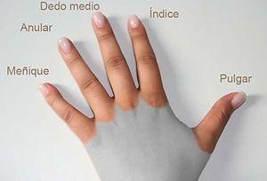 Nombre de los dedos de la mano for En que mano se usa el anillo de compromiso