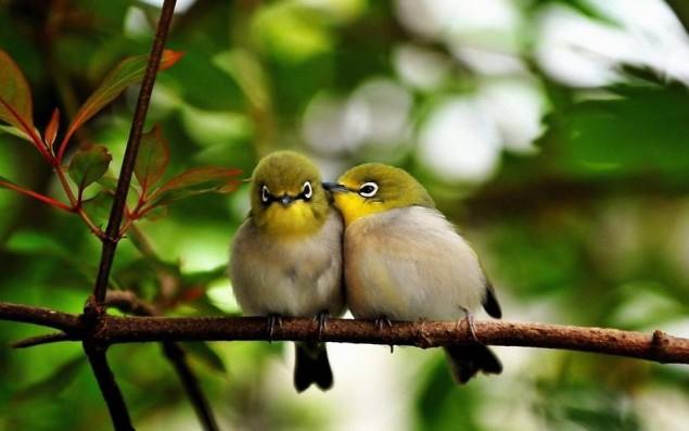 Imagenes De Aves Romanticas De Amor