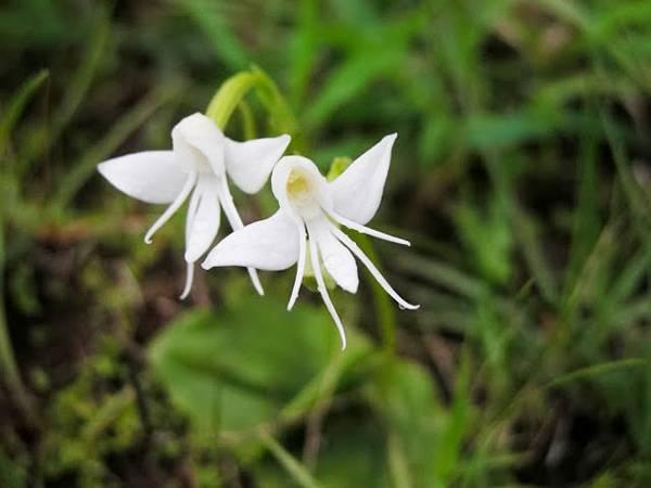 Las Flores con las formas mas raras del mundo 15