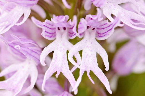 Las Flores con las formas mas raras del mundo 4