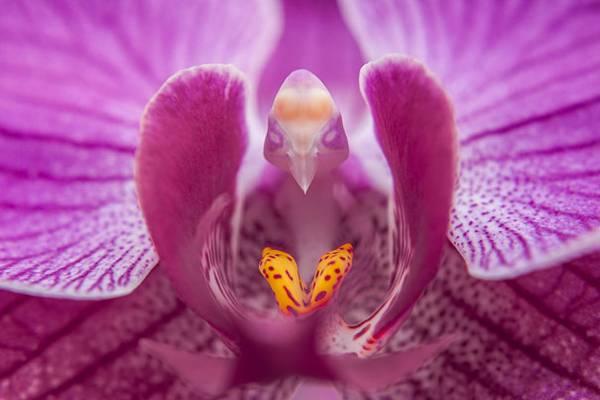 Las Flores con las formas mas raras del mundo 5