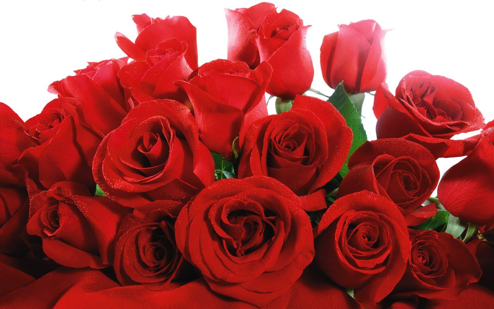 Rosas-rojas-para-el-dia-del-amor-con-mensaje-especial-para-enamorados