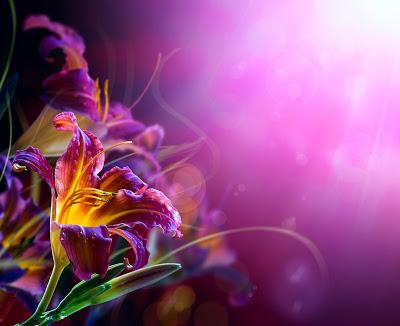 imagenes-de-amor-postales-gratis-para-el-14-de-febrero-flores-1