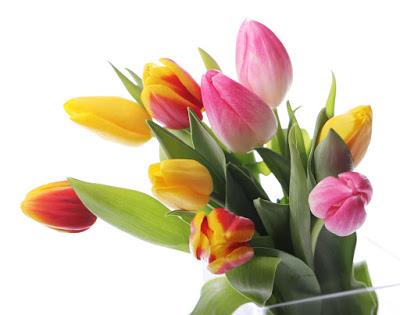 imagenes-de-amor-postales-gratis-para-el-14-de-febrero-flores-3
