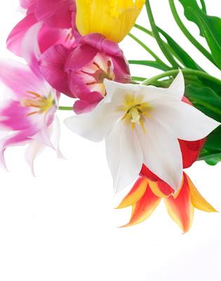 imagenes-de-amor-postales-gratis-para-el-14-de-febrero-flores-4