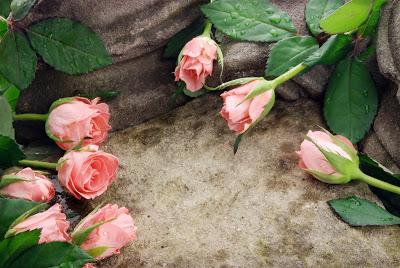 imagenes-de-amor-postales-gratis-para-el-14-de-febrero-rosas-y-corazones-5