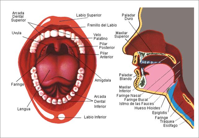 la-boca