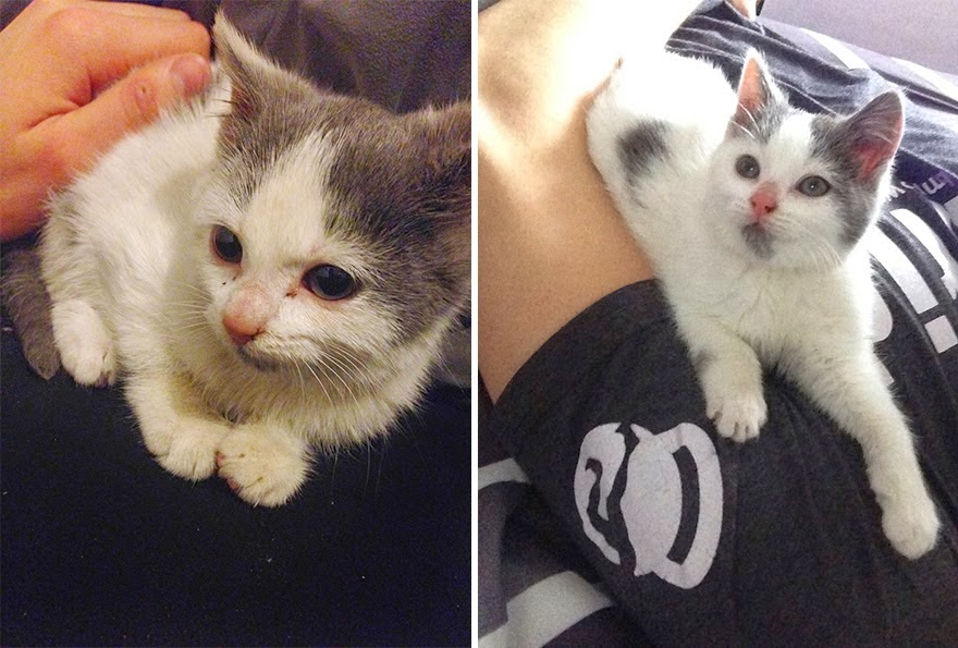 mascotas-adoptadas-antes-despues-3