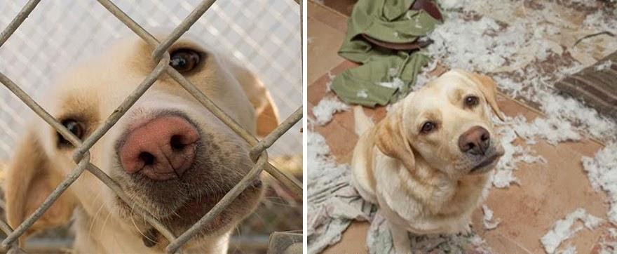 mascotas-adoptadas-antes-despues-6