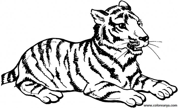 dibujos de tigre para colorear 3