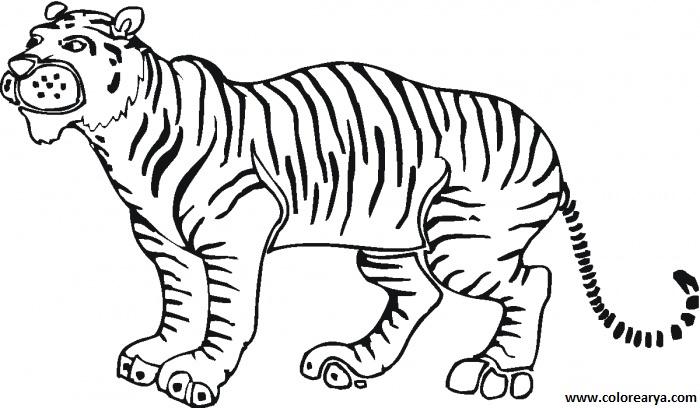 dibujos de tigre para colorear 4