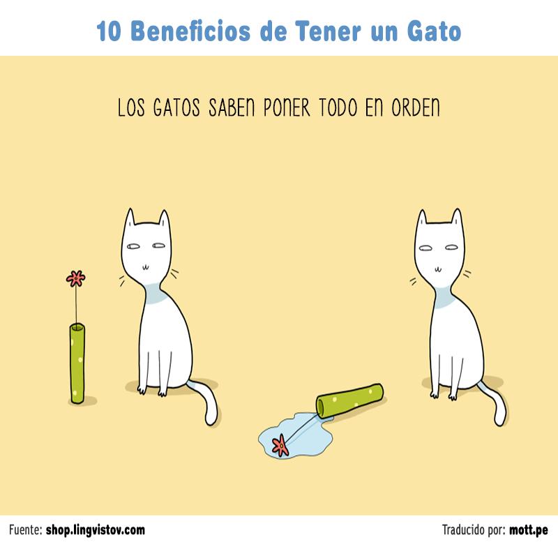 gato 002