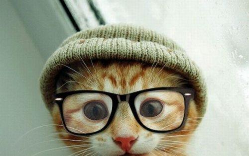 gato-hipster