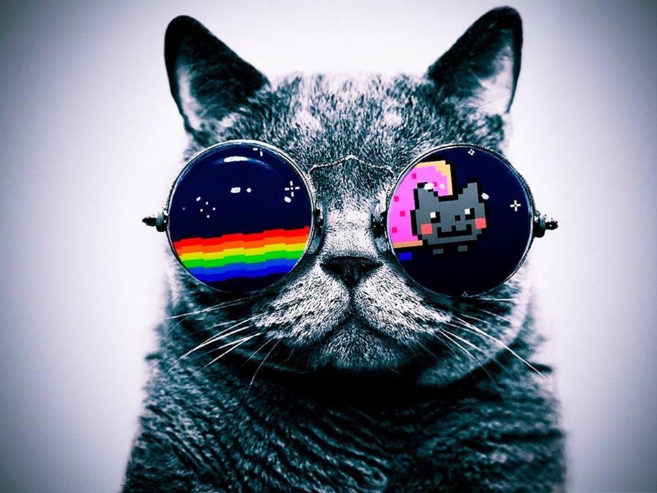 gato_by_martismiler,d6giudm. gato_psicodelico_290. gato,hipster. hamilton4.  images. tumblr_m1x41k9OSr1qbg085o1_400