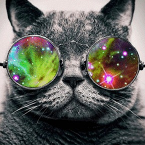 gato_psicodelico_290