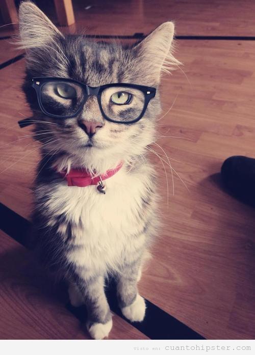 tumblr_static_gato-hipster-cat-gafas-pasta