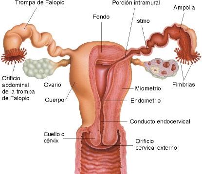 Tentorium al tratamiento de la psoriasis las revocaciones