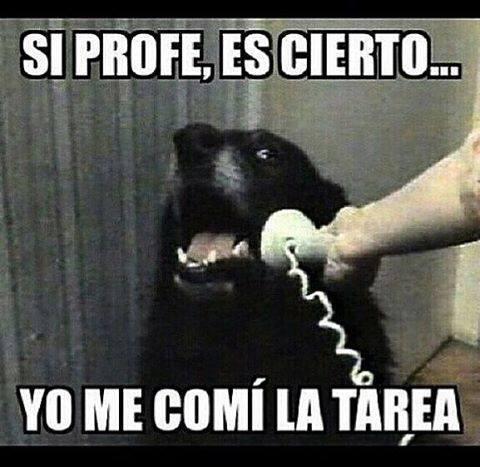 perro-come-tarea