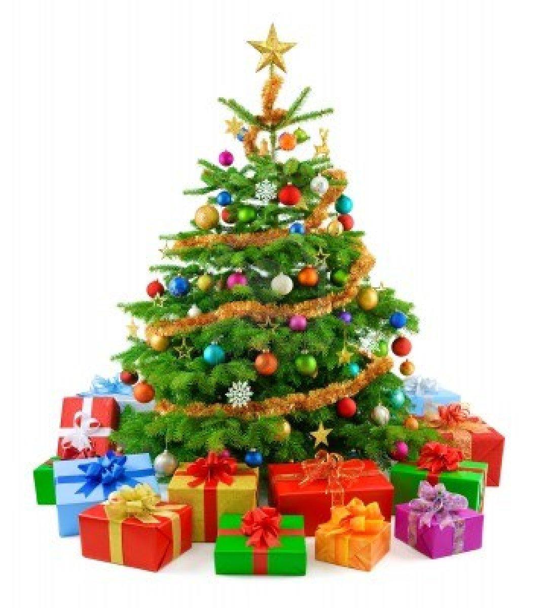 Por-qué-el-pino-es-el-árbol-de-la-navidad-3