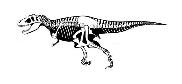 dinosaurio-rex-para-colorear-esqueleto-0