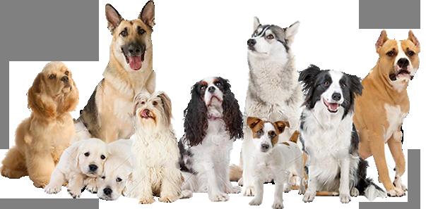 grupo-perros