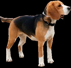 20 razas de perros yahoo dating 6