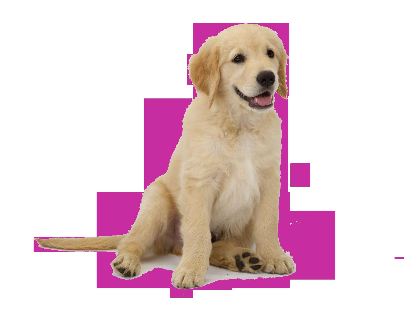 perro-04