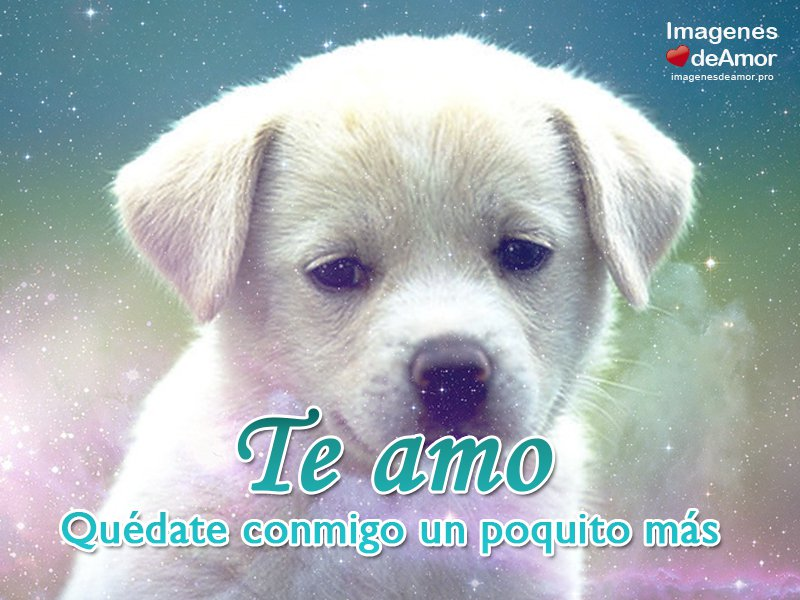 Imagenes De Amor Con Frases De Amor: Imagenes De Perritos Con Frases