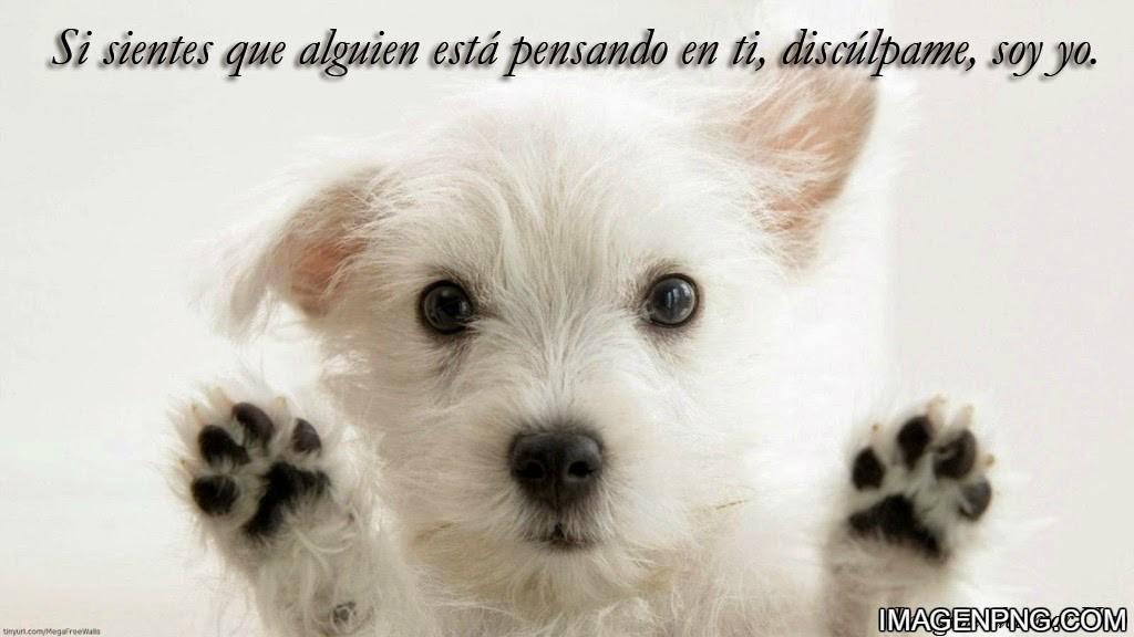 fotos-tiernas-perritos-frases-amor1