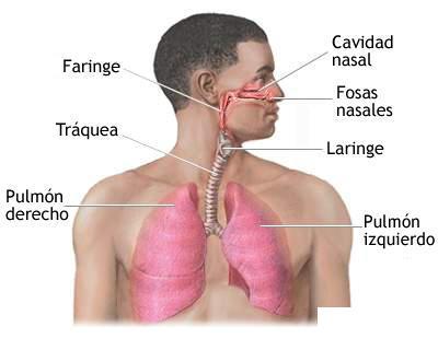 vc3adas-respiratorias