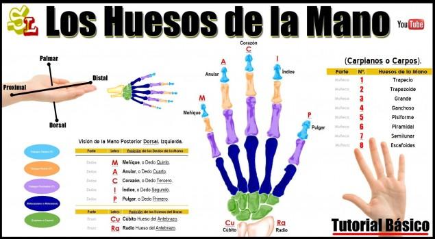 Nombre de los huesos de la mano