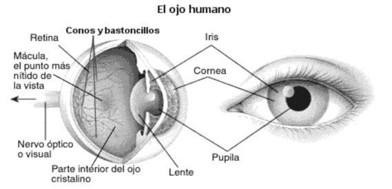 el_ojo_humanocoloreae