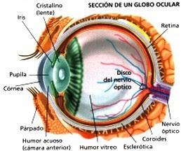 ojo[1]
