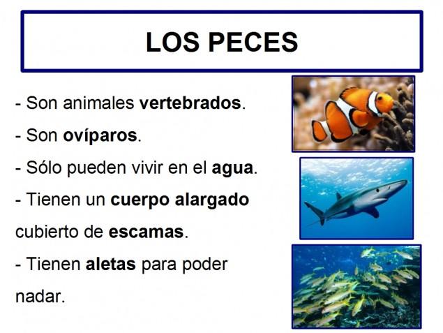Caracter sticas de los peces for Tipos de jaulas para peces