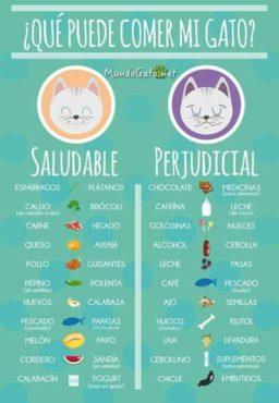 Alimentos que no pueden comer gatos y perros