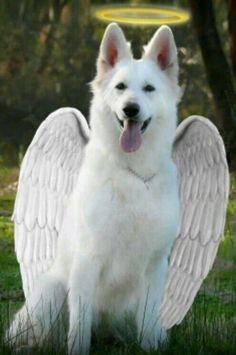 Superar la perdida de una mascota
