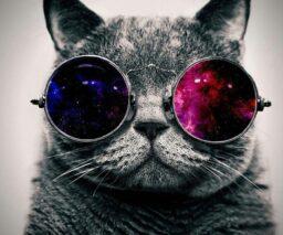 Gatitos con lentes