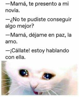 Memes de gatos llorosos